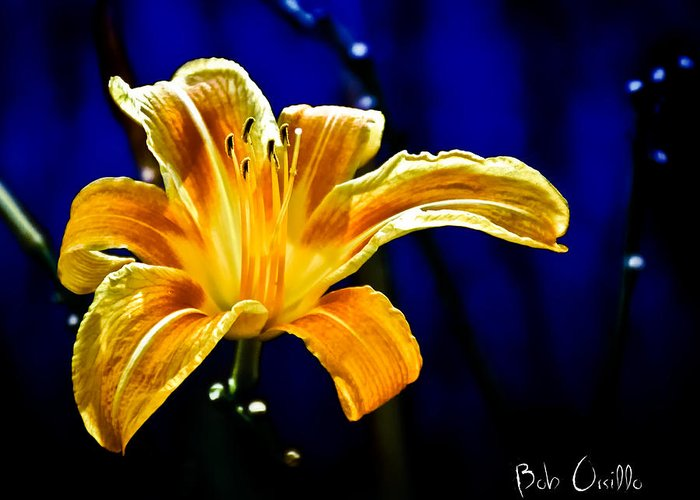 Flowers Greeting Card featuring the photograph Tiger Lily On Waters Edge by Bob Orsillo