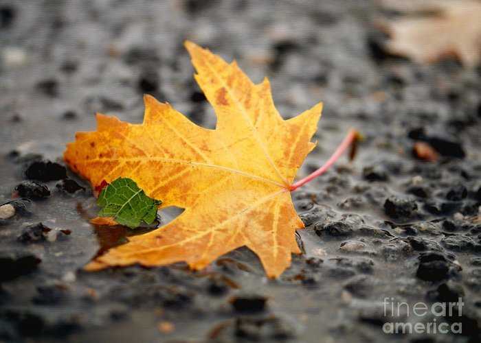 Healing Foliage Photography For A Leaf Meditation. Autumn Maple Tree Fallen Leaf Greeting Card featuring the photograph Touch Of Green by Irina Wardas