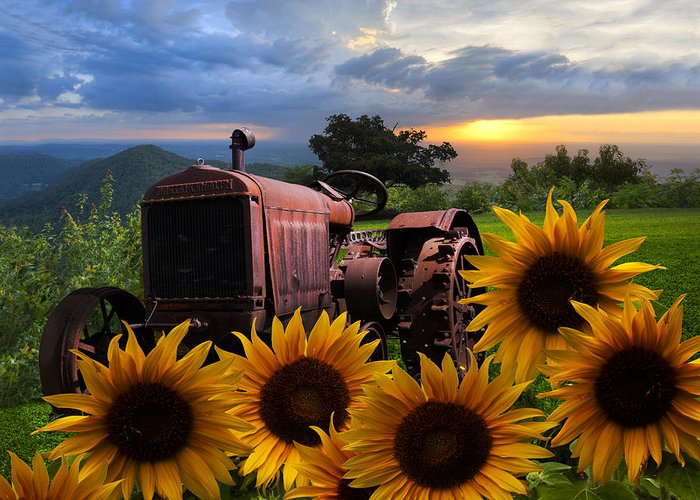 Appalachia Greeting Card featuring the photograph Tractor Heaven by Debra and Dave Vanderlaan