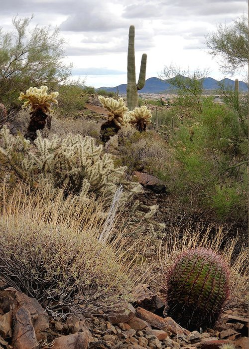 Desert Greeting Card featuring the photograph Trailside by Gordon Beck