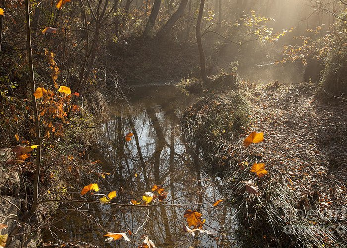 Mystical Greeting Card featuring the photograph Travertine Creek In The Woods by Iris Greenwell