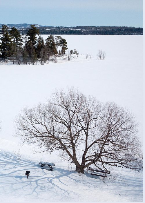 Art Greeting Card featuring the photograph Tree And The Point In Winter by Rob Huntley