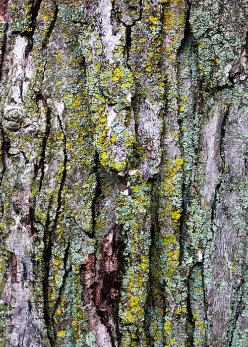 Tree Bark Detail Study Moss Nature Branches Leaves Green Greeting Card featuring the mixed media Tree Bark Detail Study by Design Turnpike