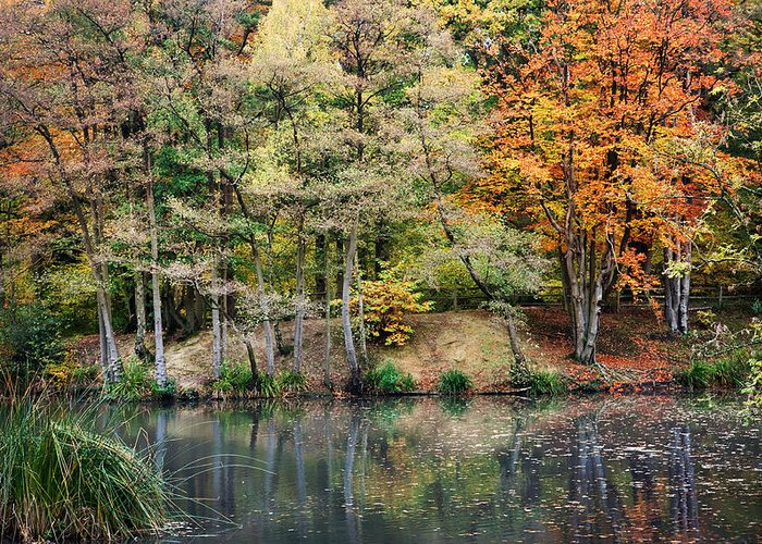 Autumn Greeting Card featuring the photograph Trees In Autumn by Natalie Kinnear