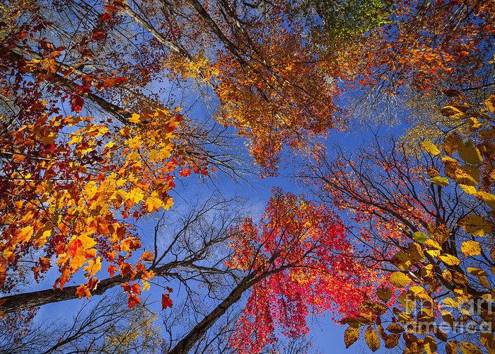 Fall Greeting Card featuring the photograph Treetops In Fall Forest by Elena Elisseeva