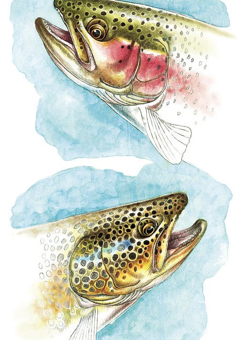 Jon Q Wright Greeting Card featuring the painting Trout Study by JQ Licensing