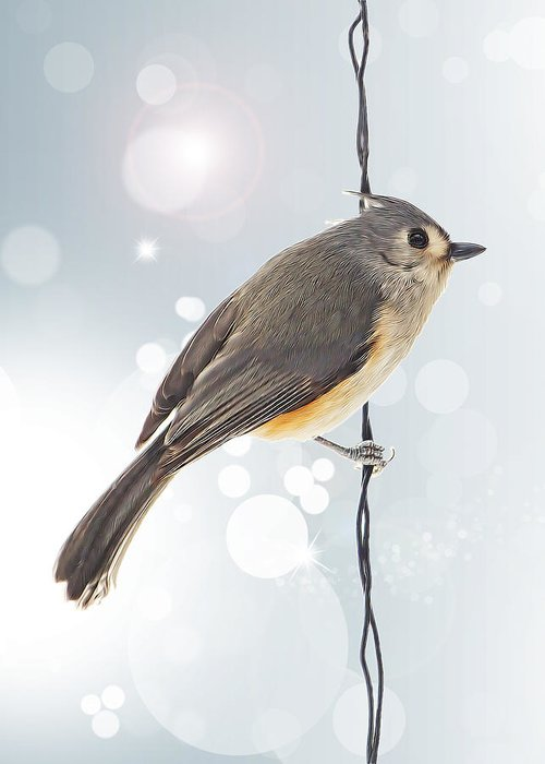 Tufted Titmouse Greeting Card featuring the photograph Tufted Titmouse Twinkle by Bill Tiepelman