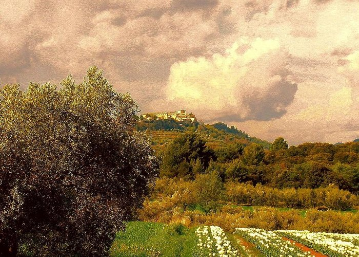 Tulips Field Photograph Photographs Greeting Card featuring the photograph Tulips Field And Lurs Village In Provence France by Flow Fitzgerald