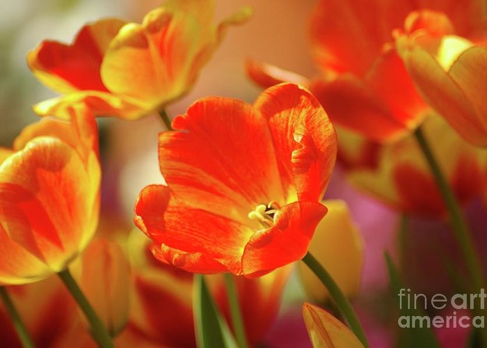 Tulips Greeting Card featuring the photograph Tulips by Kathleen Struckle