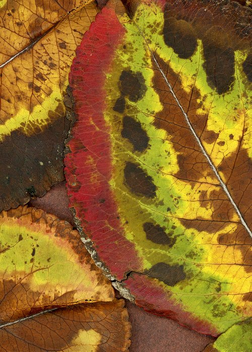 Leaf Greeting Card featuring the photograph Turning Leaves 3 by Stephen Anderson
