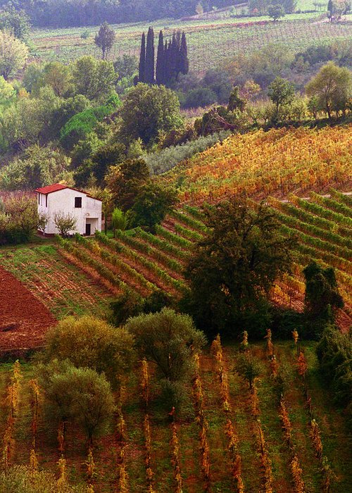 Montepulciano Greeting Card featuring the photograph Tuscan Autumn by John Galbo
