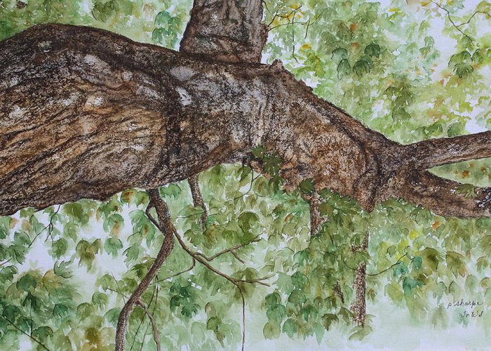 Nature Greeting Card featuring the painting Twisted Maple by Patsy Sharpe