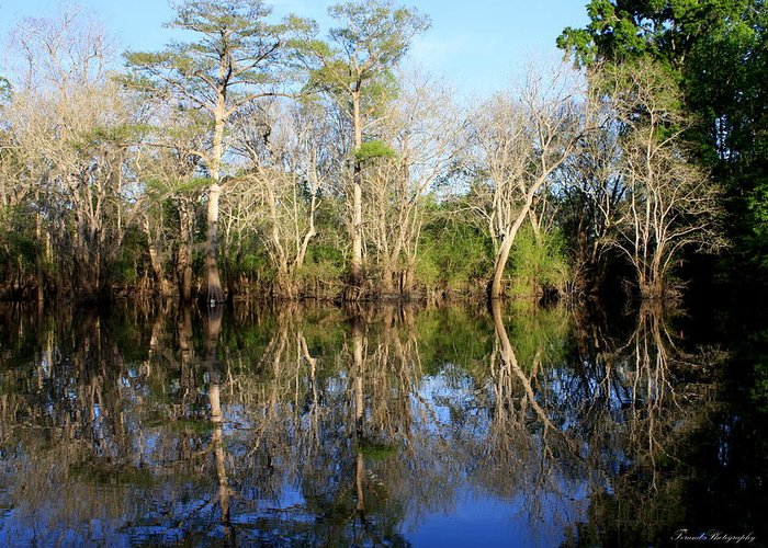River Greeting Card featuring the photograph Ultimate Reflection by Debra Forand