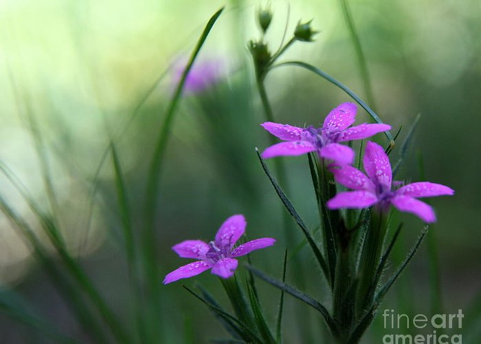 Purple Greeting Card featuring the photograph Ultra Violet by Neal Eslinger
