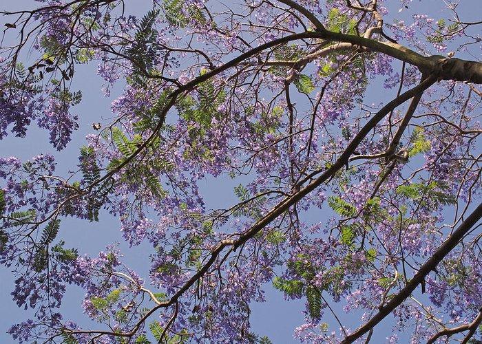 Jacaranda Greeting Card featuring the photograph Under The Jacaranda Tree by Rona Black