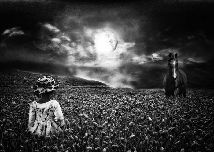 Horse Greeting Card featuring the photograph Under The Moonlight by Sabine Peters