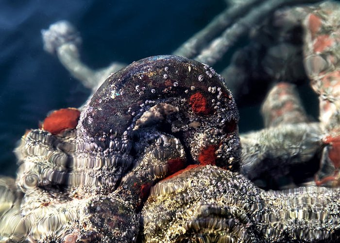 Underwater Iron Ring Greeting Card featuring the photograph Underwater Iron Ring by John Rizzuto