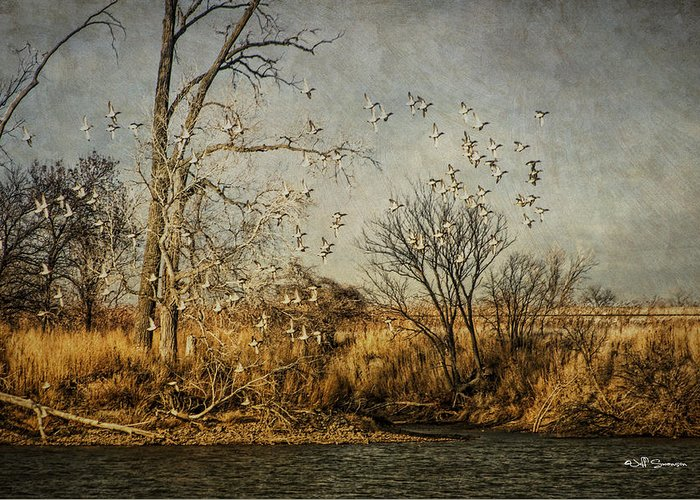 Ducks Greeting Card featuring the photograph Up Up And Away by Jeff Swanson