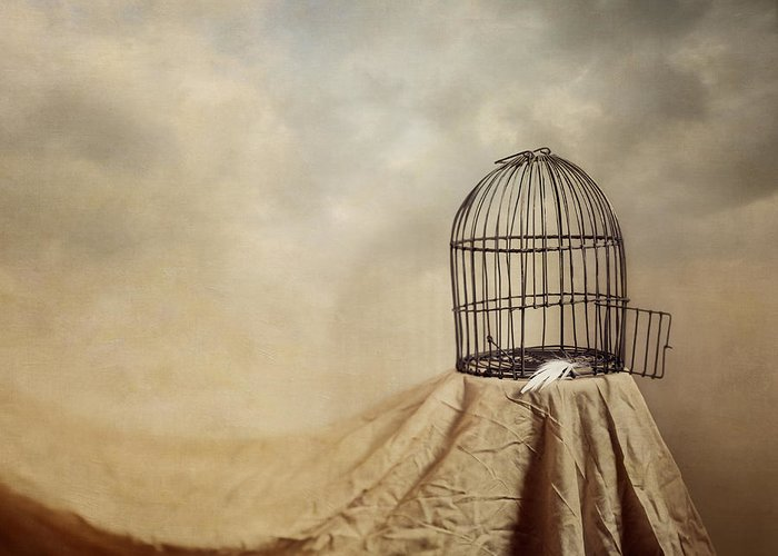 Cage Greeting Card featuring the photograph Vanishing Act by Amy Weiss