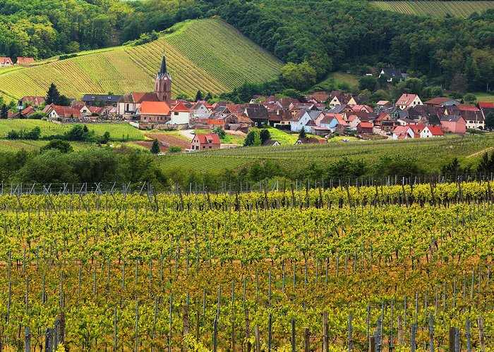Vineyards Greeting Card featuring the photograph View Of Rodern From The Vineyards Of Alsace by Greg Matchick