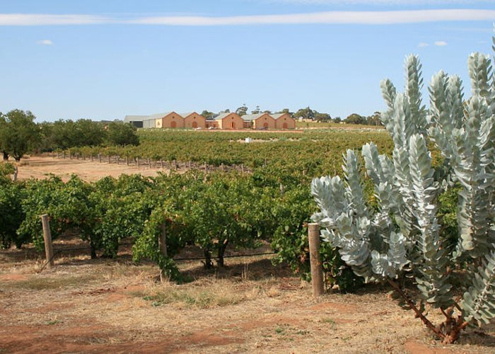 Australia Greeting Card featuring the photograph Vineyard And Winery by Carl Koenig