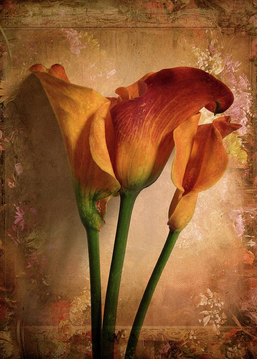 Flower Greeting Card featuring the photograph Vintage Calla Lily by Jessica Jenney