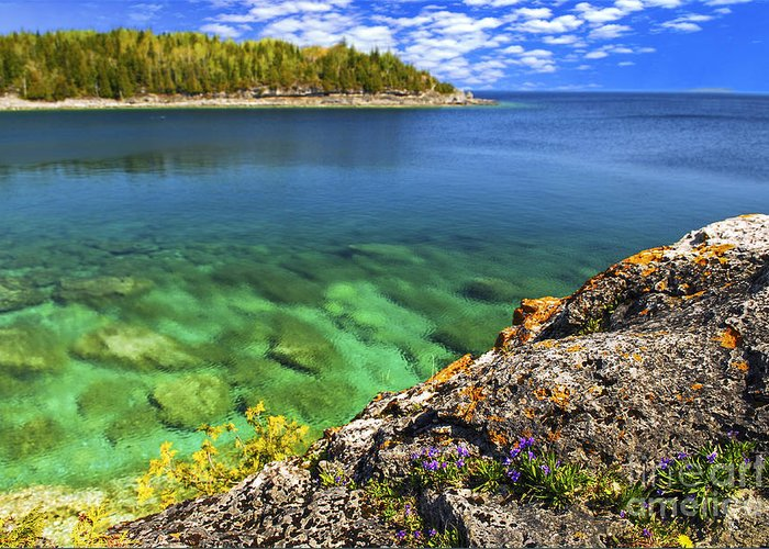 Landscape Greeting Card featuring the photograph Violets At Georgian Bay by Elena Elisseeva