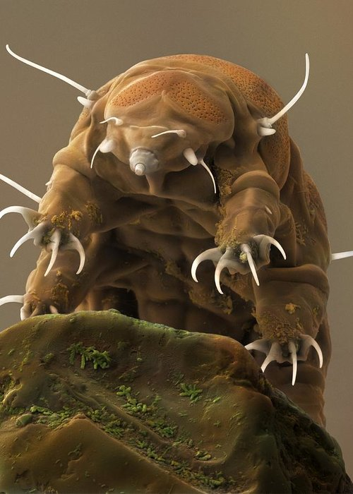 Aquatic Greeting Card featuring the photograph Water Bear Or Tardigrade by Science Photo Library