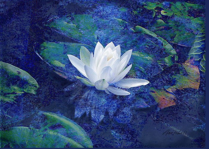 Water Lily Greeting Card featuring the photograph Water Lily by Ann Powell