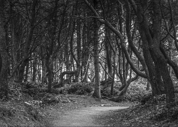 Scenery Greeting Card featuring the photograph We Follow The Path by Jon Glaser