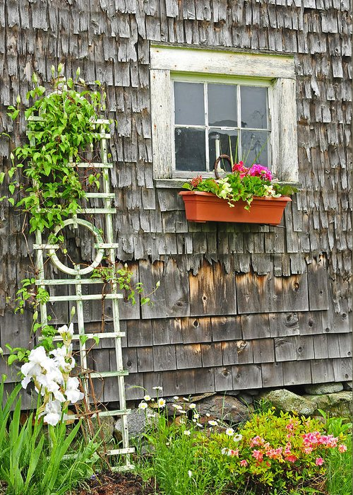 Flowers Greeting Card featuring the photograph Weathered Maine Seacoast Barn by Thomas Schoeller