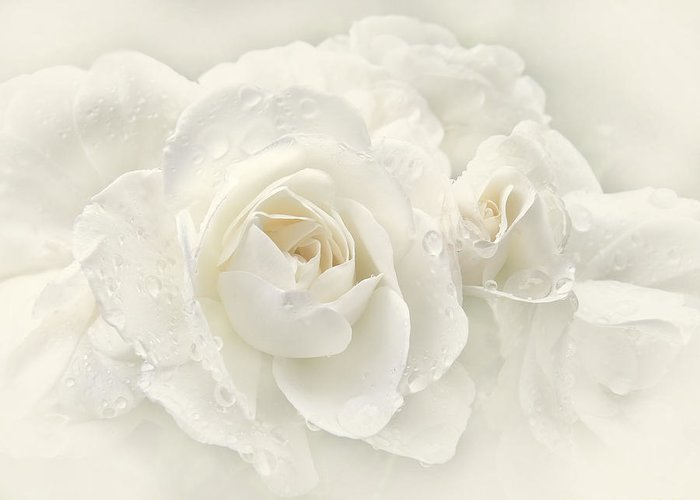Rose Greeting Card featuring the photograph Wedding Day White Roses by Jennie Marie Schell
