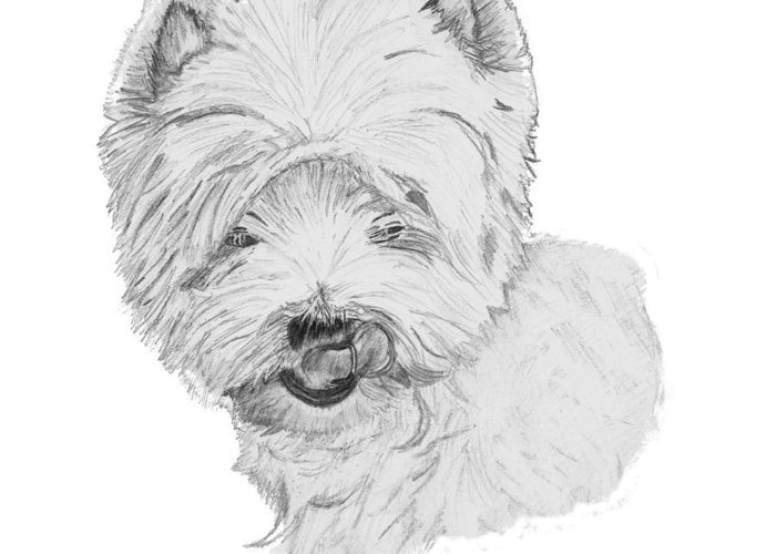Westie Greeting Card featuring the drawing West Highland Terrier Drawing by Catherine Roberts
