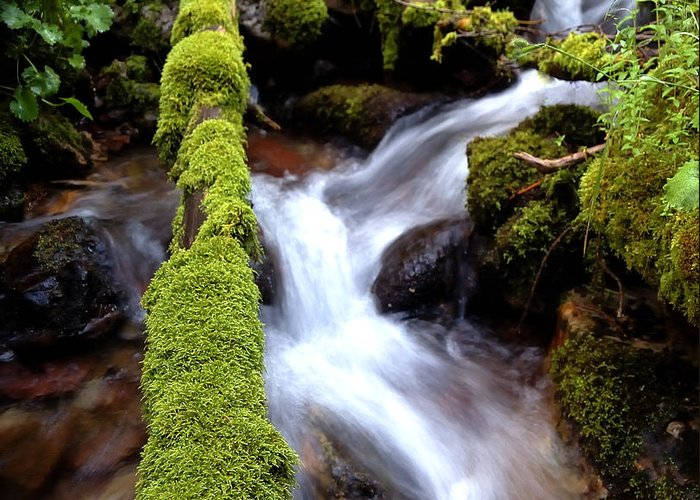 Color Greeting Card featuring the photograph Wet And Green by Steven Milner