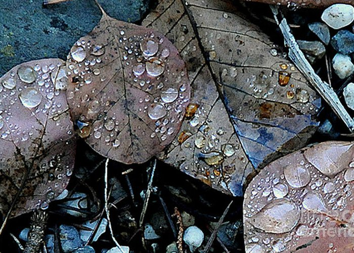 Wet Leaves Greeting Card featuring the photograph Wet Leaves by Artist and Photographer Laura Wrede