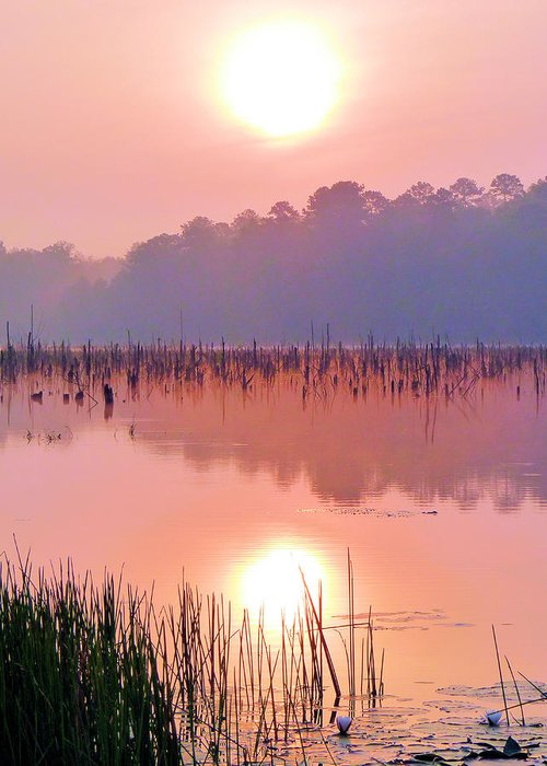 Alabama Greeting Card featuring the photograph Wetlands Sunrise by JC Findley