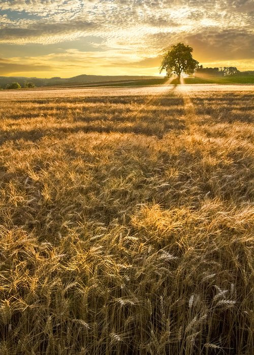 Appalachia Greeting Card featuring the photograph Wheat Fields Of Switzerland by Debra and Dave Vanderlaan