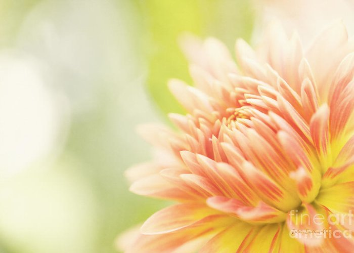 Dahlia Greeting Card featuring the photograph When Summer Dreams by Beve Brown-Clark Photography