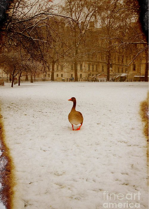 Goose Greeting Card featuring the photograph Where Is Everyone by Jasna Buncic