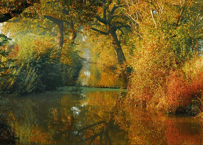 Pano Panoramic Landscape Woodland Scenes Orange The Fall River Stream Colours Autumn Beautiful Gorgeous Dreamy Greeting Card featuring the photograph Where The Adventure Begins by John Chivers