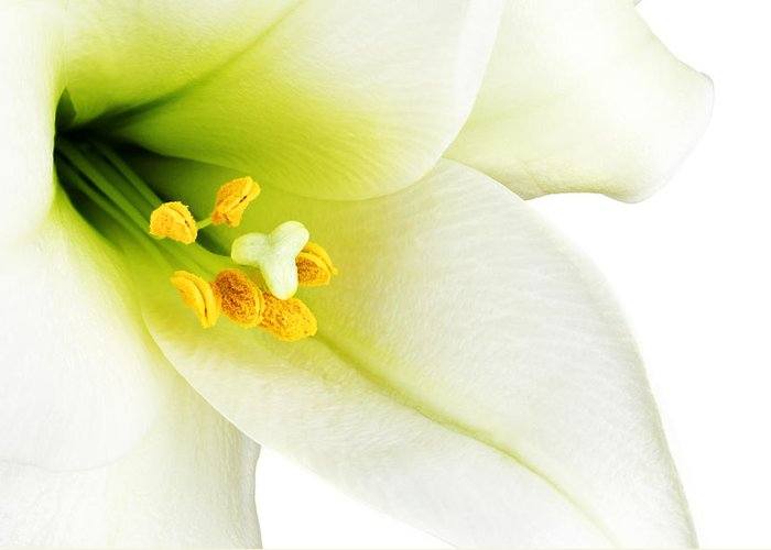 Beautiful Greeting Card featuring the photograph White Lilly Macro by Johan Swanepoel