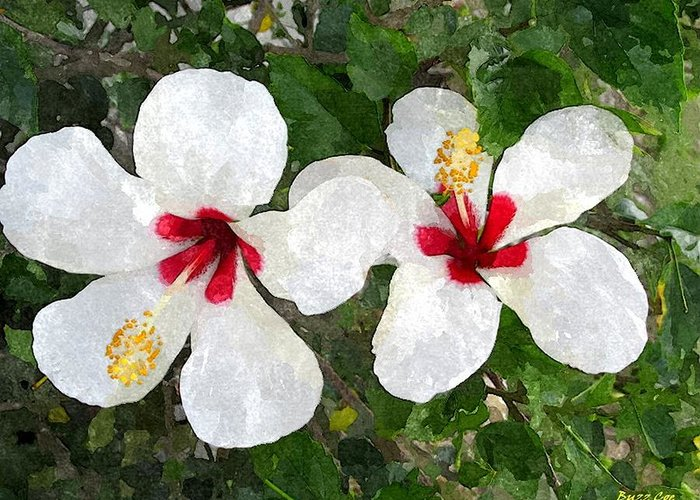 Hibiscus Greeting Card featuring the photograph White Twin Hibiscus With Red Veriegation by Buzz Coe