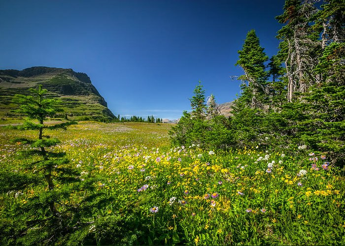 Glacier National Park Greeting Card featuring the photograph Wild Mountain Flowers Glacier National Park  by Rich Franco