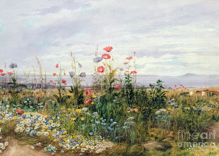 Meadow; Flowers; Irish; Wild; Landscape; Poppies Greeting Card featuring the painting Wildflowers With A View Of Dublin Dunleary by A Nicholl