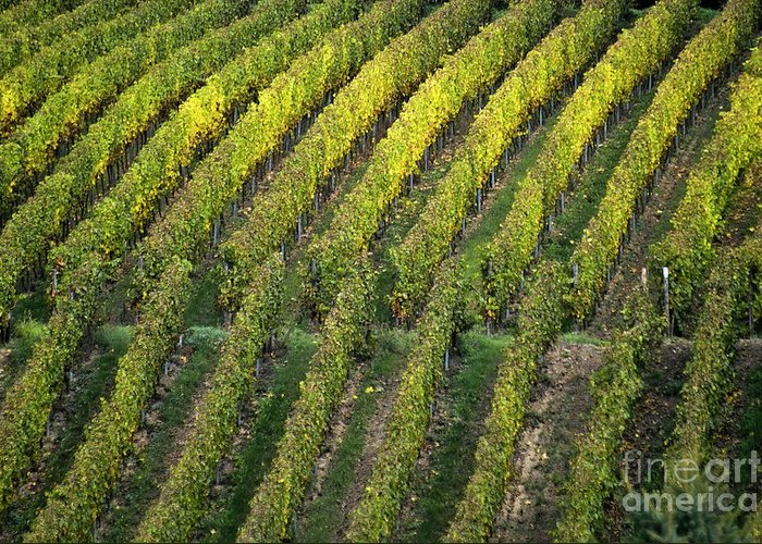 Heiko Greeting Card featuring the photograph Wine Acreage In Germany by Heiko Koehrer-Wagner