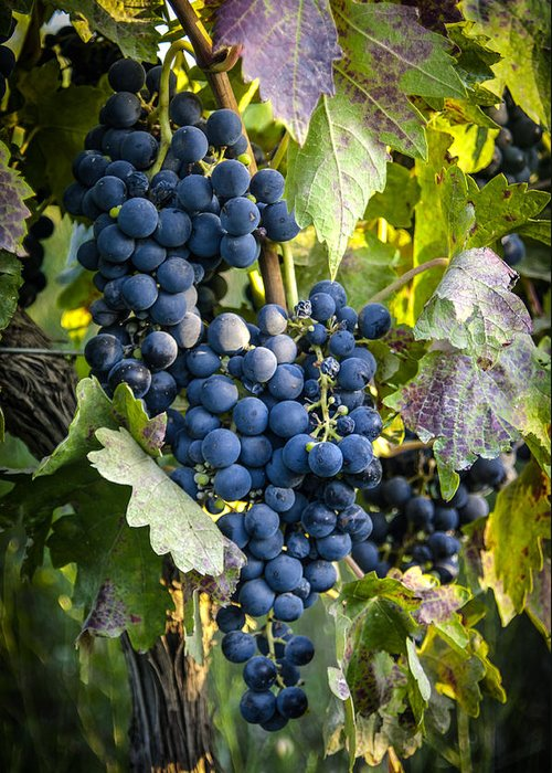 Grapes Greeting Card featuring the photograph Wine Grapes by Tetyana Kokhanets