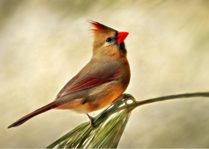 Bird Greeting Card featuring the painting Winter Cardinal by Christina Rollo