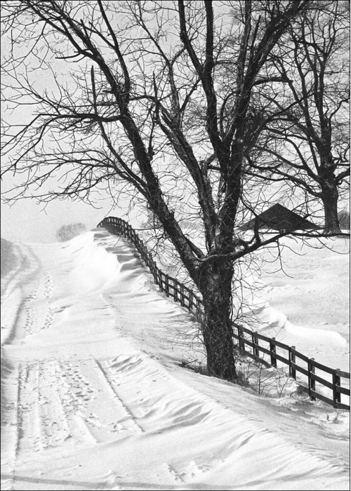 Kentucky Greeting Card featuring the photograph Winter Driveway by Wendell Thompson