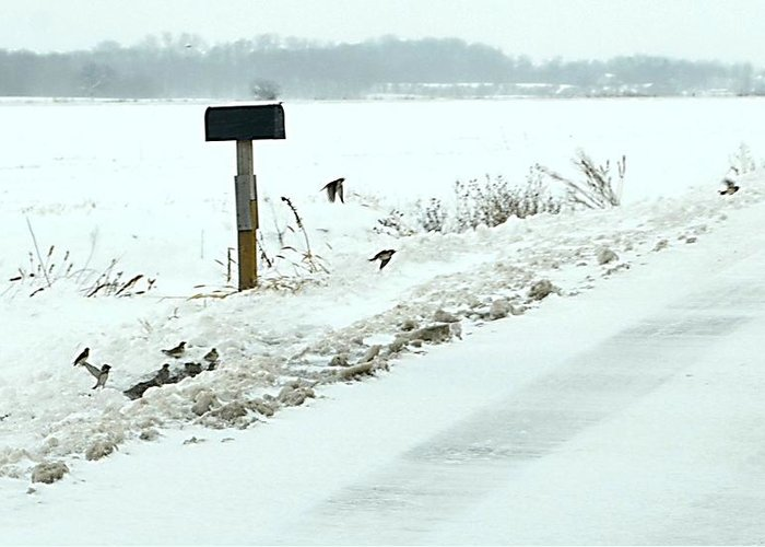 Indiana Scenes Greeting Card featuring the photograph Winter Foragers by Julie Dant