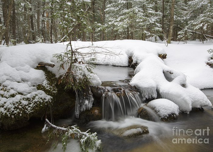 Lincoln Greeting Card featuring the photograph Winter Forest - Lincoln New Hampshire Usa by Erin Paul Donovan